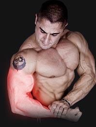 Ramiona Triceps Biceps